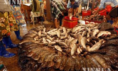 စံပြငါးဈေး၌ ငါးများရောင်းဝယ်နေသည်ကို တွေ့ရစဉ် (ဆင်ဟွာ)