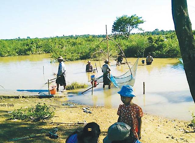ငါးမွေးမြူရေးကန်တစ်ခု၌ ငါးများဖမ်းဆီးနေကြသည့်ကို တွေ့ရစဉ် (ဓာတ်ပုံ-မြဝတီ)