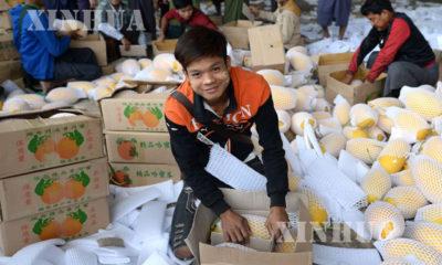 တရုတ်နိုင်ငံ ယူနန်ပြည်နယ် Ruili မြို့ရှိ သခွားမသီး အရောင်းဆိုင်တစ်ဆိုင်တွင် အလုပ်လုပ်နေသော မြန်မာအလုပ်သမားတစ်ဦးအား ၂၀၁၉ ခုနှစ်မတ် ၈ ရက်က တွေ့ရစဉ်(ဆင်ဟွာ)
