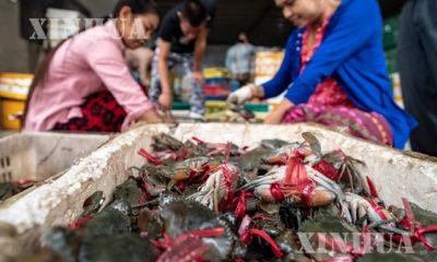 တရုတ်နိုင်ငံ အနောက်တောင်ပိုင်း ယူနန်ပြည်နယ်၊ Ruili မြို့ရှိ ဈေးတစ်ခုတွင် မြန်မာနိုင်ငံမှ တင်ပို့လာသော ဂဏန်းကောင်များကို အလုပ်သမားများ ရွေးချယ်နေသည်ကို ၂၀၁၉ ခုနှစ် နိုဝင်ဘာ ၅ ရက်က တွေ့ရစဉ် (ဆင်ဟွာ)
