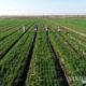 တရုတ်နိုင်ငံ အရှေ့ပိုင်း အန်းဟွေးပြည်နယ် Chaohu မြို့ရှိ လယ်ကွင်းတွင် စိုက်ပျိုးရေး လုပ်ငန်းလုပ်ကိုင်နေသူများအား တွေ့ရစဉ် (ဆင်ဟွာ)