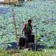 ရန်ကုန်တိုင်းဒေသကြီး ဒလမြို့နယ်ရှိ သောက်ရေကန်တစ်ခုတွင် ရေခပ်နေသူတစ်ဦးအားတွေ့ရစဉ် (ဆင်ဟွာ)