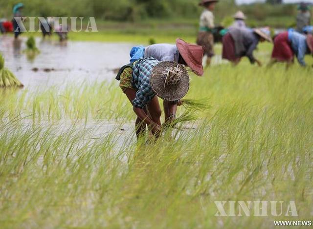 လယ်ယာလုပ်ငန်းခွင်က တောင်သူဦးကြီးများကို တွေ့ရစဉ် (ဆင်ဟွာ)