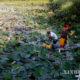 ရန်ကုန်တိုင်းဒေသကြီး ဒလမြို့နယ်တွင် ရေကန်မှ ရေခပ်ယူနေကြသူများအားတွေ့ရစဉ် (ဆင်ဟွာ)