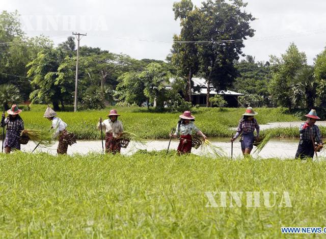 လယ်ယာလုပ်ငန်းခွင် ဝင်နေသော ကောက်စိုက်သမများကိုတွေ့ရစဉ် (ဆင်ဟွာ)