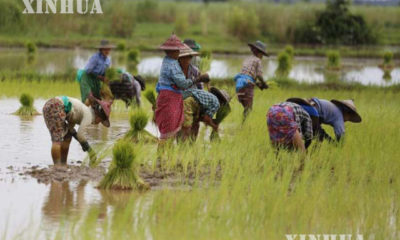 လယ်ယာစိုက်ပျိုးနေသည့် တောင်သူတချို့အားတွေ့ရစဉ် (ဆင်ဟွာ)